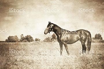 equine-108352046-360x240