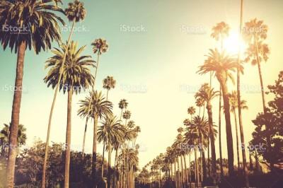 stock-photo-32047156-sun-shining-on-palm-trees